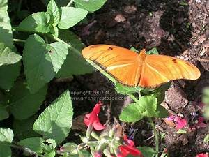 Giveneyestoseecom photos flower and garden festival for Butterfly garden orlando