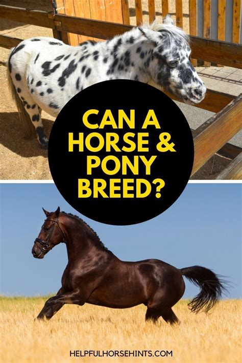 horse helpfulhorsehints breeds horses
