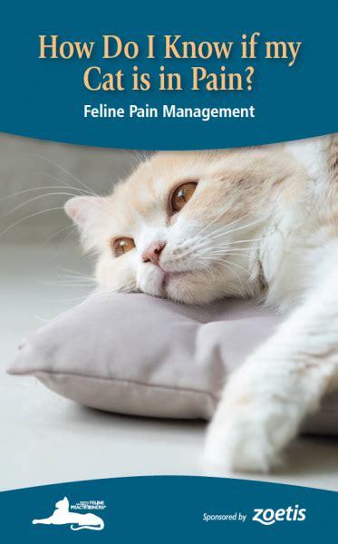 cat   pain  cat community