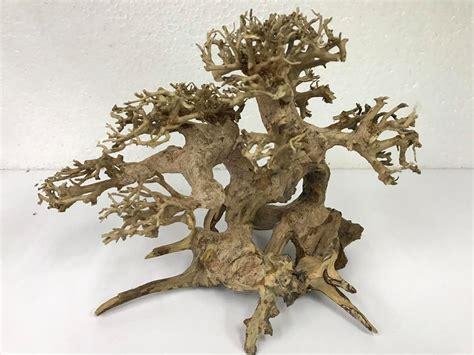 Bonsai Aquascape by Bonsai Driftwood Aquascape Wood End 1 5 2020 11 15 Am