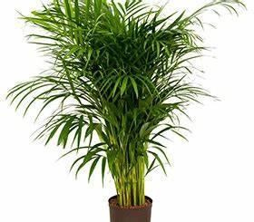 Hydrokultur Pflanzen Kaufen : b ropflanzen archive seite 2 von 3 hydrokulturen begr nungen mietpflanzen b ropflanzen ~ Buech-reservation.com Haus und Dekorationen