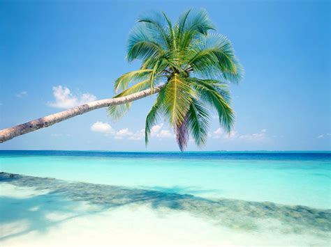 tropical island wallpapers hd wallpapers id 3739