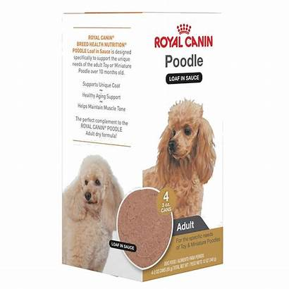 Canin Royal Poodle Miniature Toy Dog Adult