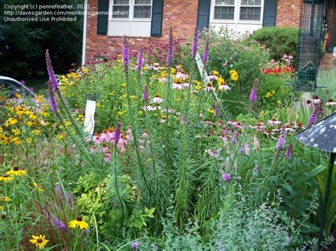 specialty gardening more cottage garden flowers 1 by
