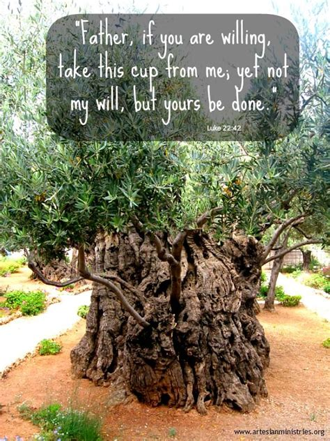 Garden Of Gethsemane Bible by Pin On Inspirational Photography