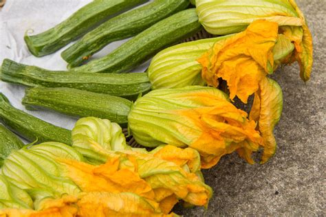 cuisiner des fleurs de courgettes recette des beignets de fleurs de courgette