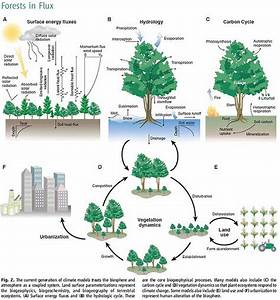 32 Best Ecosystems  Systems Thinking  Images On Pinterest
