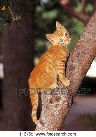 stock image  young domestic cat climbing  tree