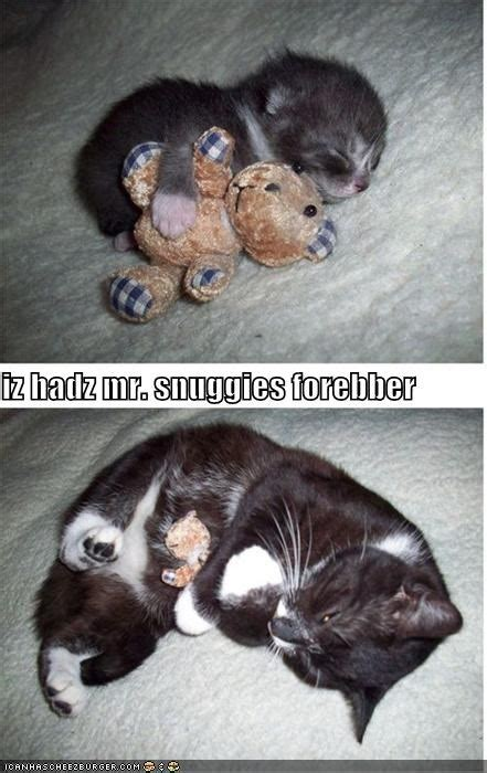 What Stuffed Toys Do For Cats Way Of Cats Blog