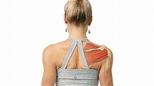 What To Know About The Shoulder Girdle