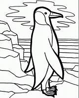 Penguin Coloring Bird Penguins Printable Cliparts Cartoon Preschool Ada Lie sketch template