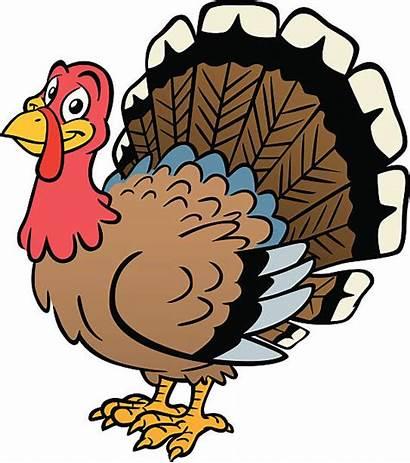 Turkey Thanksgiving Wild Vector Clipart Clip Illustrations