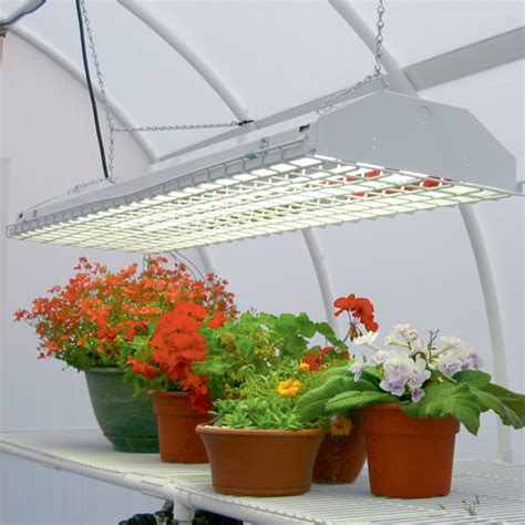 growing vegetables indoors with led lights the best lights for indoor plants pure nutrients