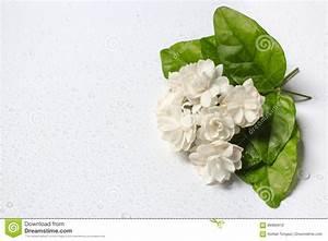 Beau Bouquet De Fleur : beau bouquet des fleurs blanches de jasmin photo stock ~ Dallasstarsshop.com Idées de Décoration