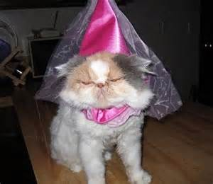 princess cat 15 hilarious cats in costumes kitty bloger