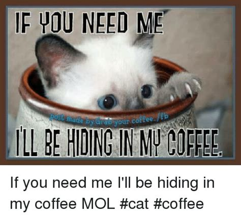 Need Coffee Meme - 25 best memes about cat coffee cat coffee memes