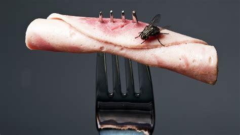 comment 233 liminer une infestation de puces dans votre maison