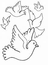 Pigeon Coloring Pages Printable Bestcoloringpagesforkids sketch template