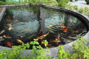 koi fish pond top 5 most common koi pond problems and their solutions