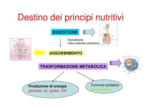 dispense biologia metabolismo dispensa di chimica degli alimenti dispense