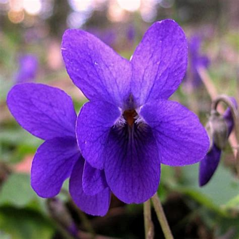 instant cuisine cabinet de curiosités botaniques 3 la violette le d 39 ombres blanches