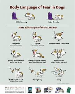 How to recognize body language of fear in dogs - teaching ...