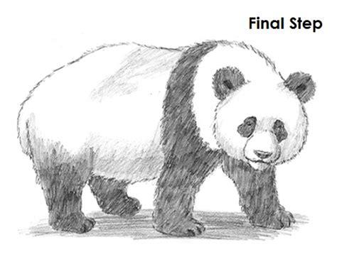 draw  panda step  step guide   draw