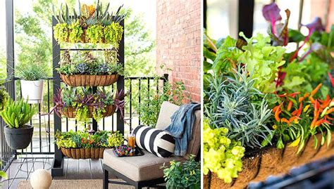 Vertical Garden Project by 8 Diy Vertical Garden Projects For Balcony Balcony