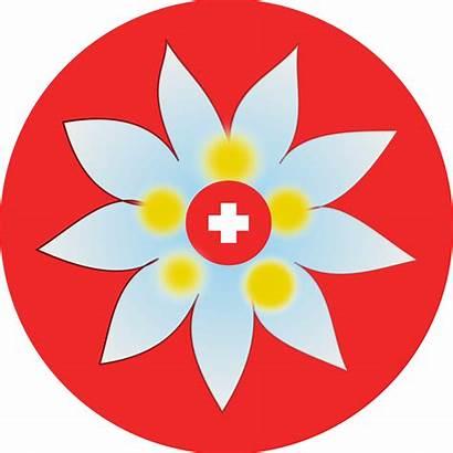 Edelweiss Swiss Clipart Cross Flower Clip Flowers