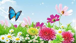 butterfly garden wallpaper flowers summer cosmos friday ...
