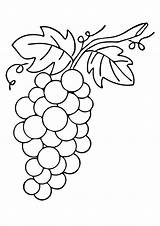 Grapes Coloring Grape Pages Printable Worksheets Vine Drawing Leafy Fruit Vines Parentune sketch template