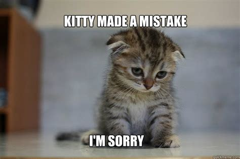 Sorry Meme - image gallery sorry kitty