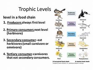 13.4-Food Chains and Food Webs - ppt video online download