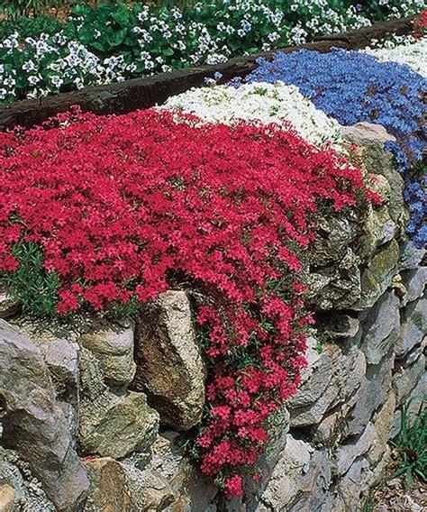 flowers that spread quickly 25 best ideas about full sun perennials on pinterest full sun garden full sun flowers and
