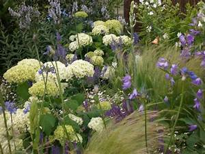 Welche Pflanzen Passen Zu Rosen : hortensien die gro e vielfalt mein sch ner garten ~ Lizthompson.info Haus und Dekorationen