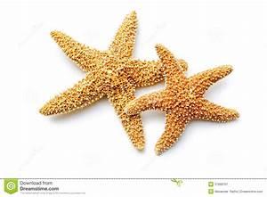 Etoile De Mer Dofus : toile de mer image stock image du souvenir fond plage 37998767 ~ Medecine-chirurgie-esthetiques.com Avis de Voitures