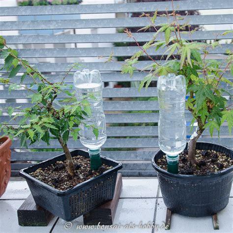 Pflanzen Während Urlaub Bewässern by Ausgezeichnete Bew 228 Sserung Pflanzen Plastikflasche In