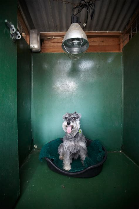 will a heat l keep a dog warm copied hall kennels gallery and testimonials