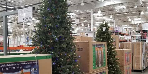 when does costco sell christmas trees avon costco has already started selling trees