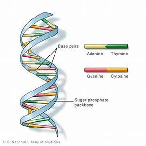 Redefining Dna  Darwin From The Atom Up