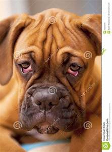 Sad Puppy Eyes Clipart - Clipart Suggest
