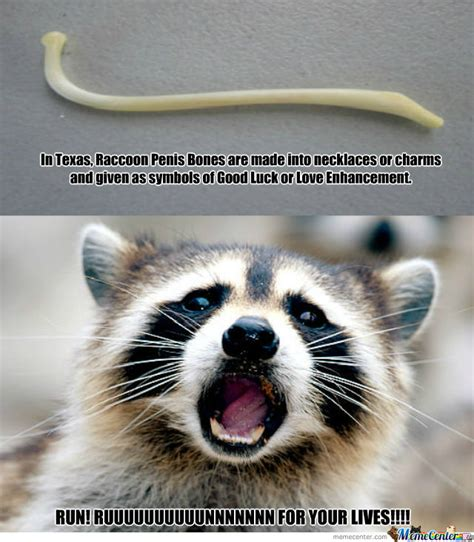 Funny Raccoon Meme - not so lucky for raccoons by douglasdegraw meme center