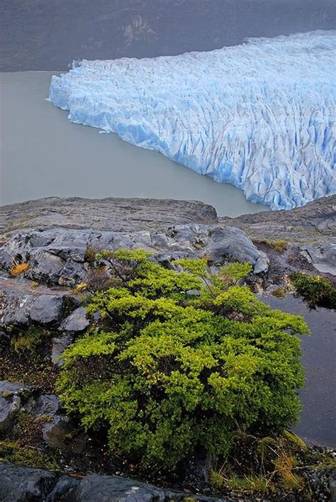 Grey Lake National Park Torres Del Paine Chile