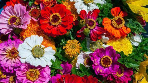 flores mais bonitas  mundo youtube