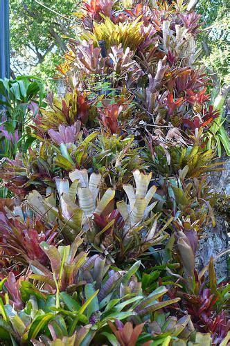 bromeliads wow broms friends tropical garden bog