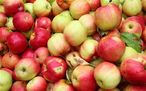 Enna Fruit pokreće akciju 'Mjesec domaće jabuke' s ciljem ...