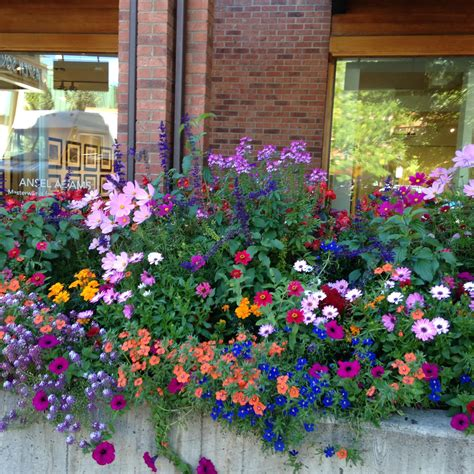 Color Pots And Container Gardens  New Castle To Aspen