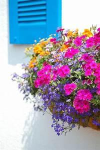 Blumen Für Südbalkon : 55 balkonbepflanzung ideen tolle blumen f r balkon ~ Watch28wear.com Haus und Dekorationen