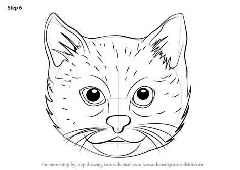 learn   draw  cat face cats step  step drawing