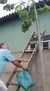 Se Débarrasser Des Guepes : comme se d barrasser d 39 un nid de gu pes ~ Melissatoandfro.com Idées de Décoration